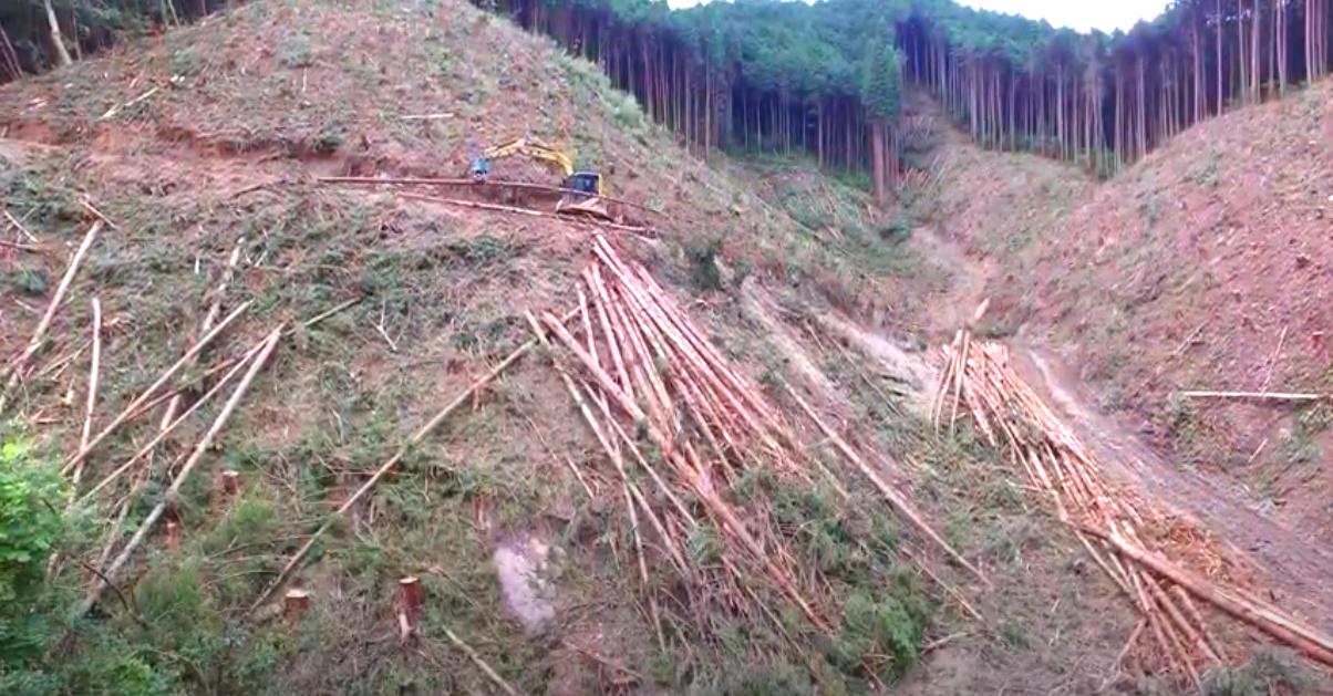 伐採期を迎えた大和木材の社有林の様子を動画で公開!